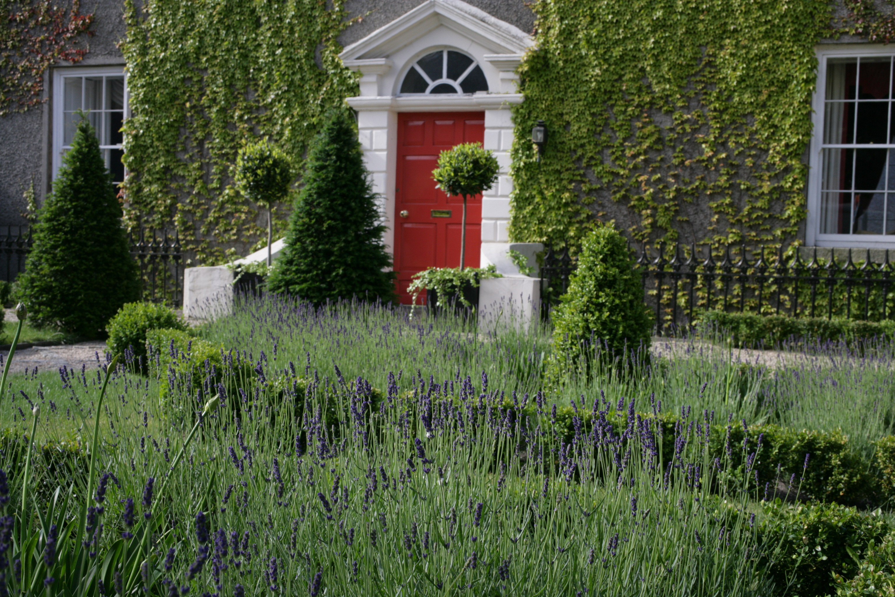 classical formal lavender garden